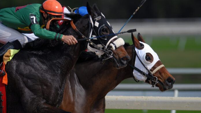 Horse Race Tokyo
