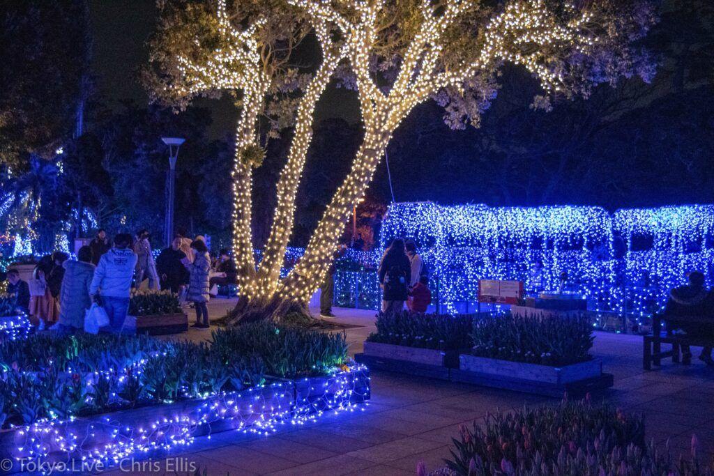 Enoshima Illumination Trees